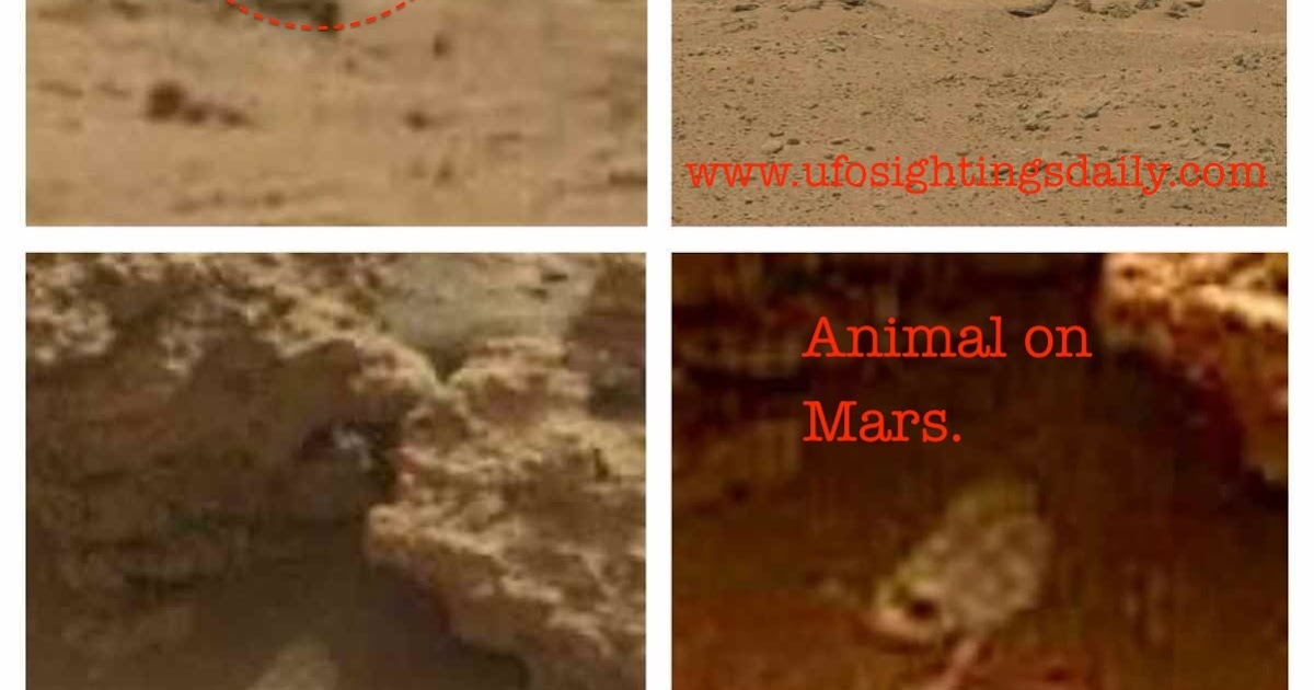 mars rover finds animal - photo #18