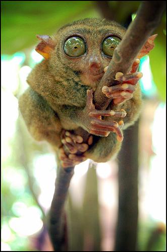 animales raros y graciosos mural! - fotos de animales raros graciosos y feos