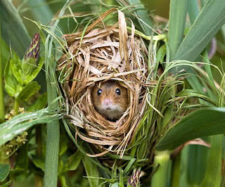 mouse nest, funny animal pictures, animal pics