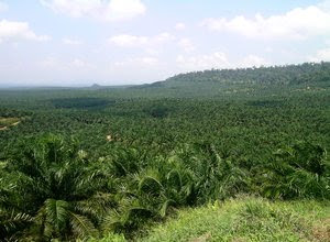 jenis-tanah-kelapa-sawit.jpg