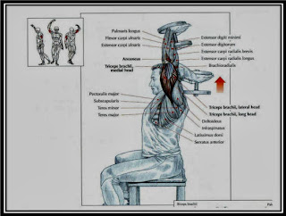 Seated Dumbbell Triceps Extension