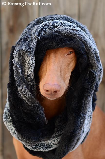 dog fur scarf