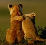 http://wheresthekarma.blogspot.com/2013/11/best-hug-pictures.html