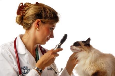 Ser Ayudante Técnico Veterinario | AZeduc
