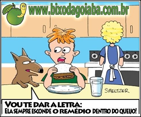 dica do cachorro: ela sempre esconde o remédio dentro do queijo