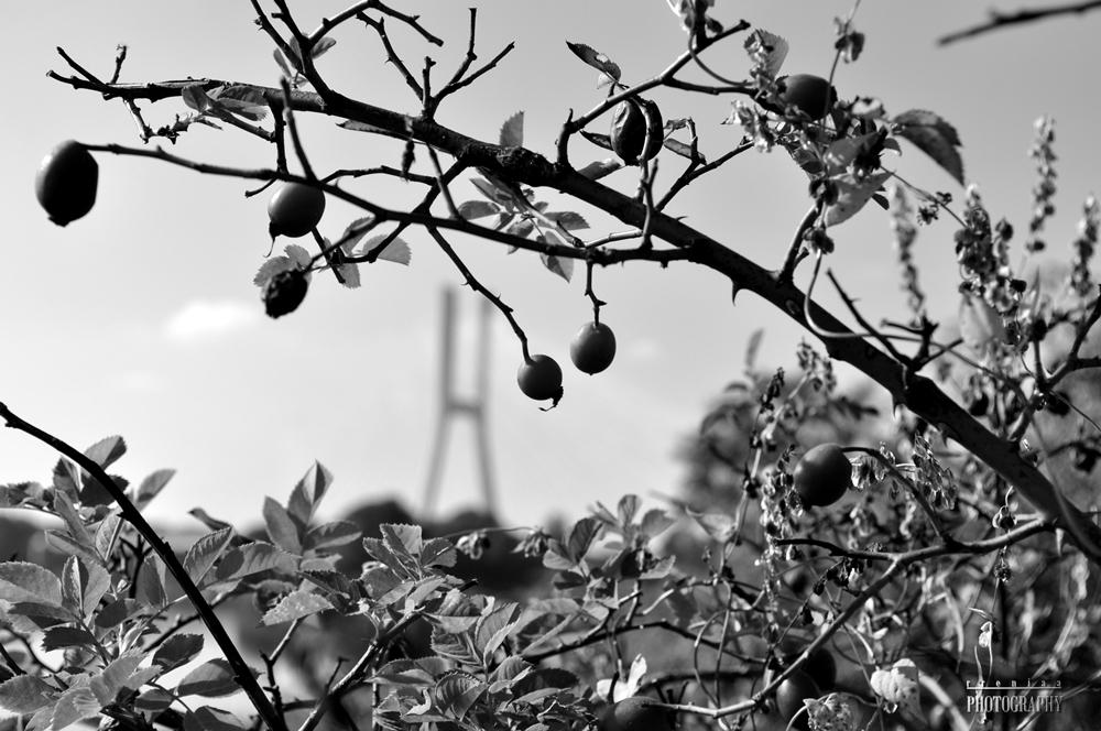 WrocLove Photoblog, rreniaaphotography