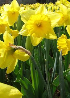 W oczekiwaniu na wiosnę...