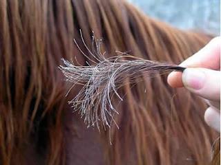 مشكله تقصف الشعر..الاسباب و الحلول %D9%86%D8%B5%D8%A7%D