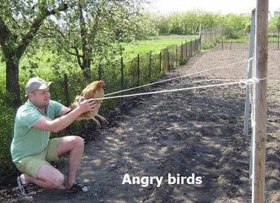 Has probado ya el Angry Bird 1.0