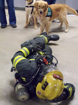 GDB puppies check out a firefighter