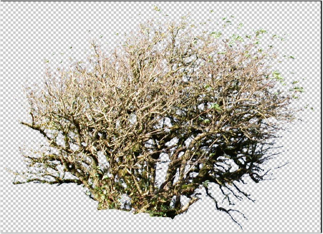 Recursos chele guada 67 arbustos y plantas de jardin en - Arboles y plantas de jardin ...