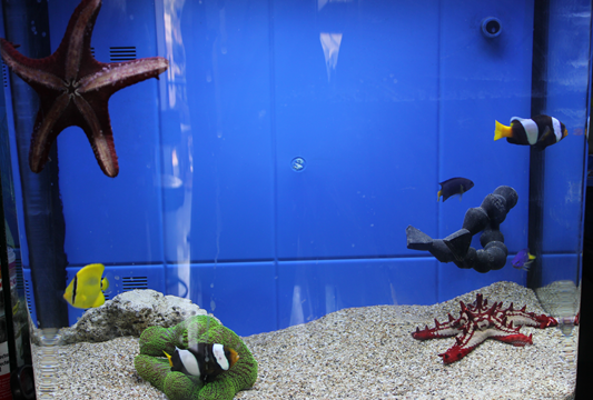 Types of fish tanks you can have about pet animals and for Marina fish tank