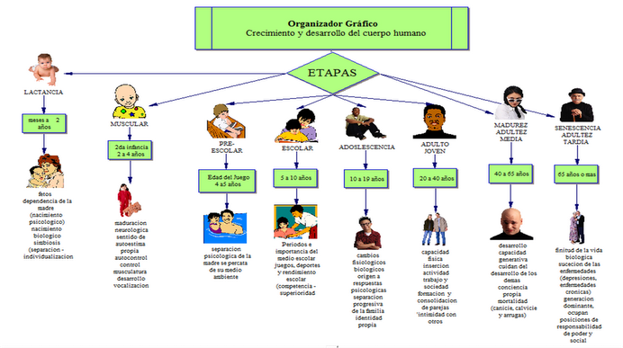 erikson timeline Your child is growing every day learn the developmental tasks involved in the social and emotional development of children with this helpful overview of erikson's stages of development.