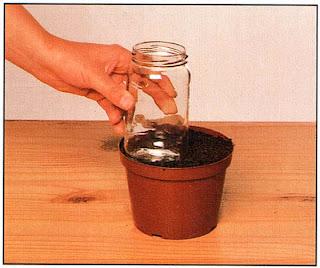 Наполните горшок почвенной смесью для семян и утрамбуйте ее круглым чурбачком или банкой из-под джема