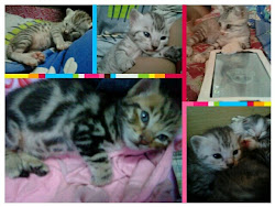 ~..mY cUtE cAt...~