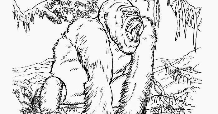kong coloring pages 100 images kong country returns coloring