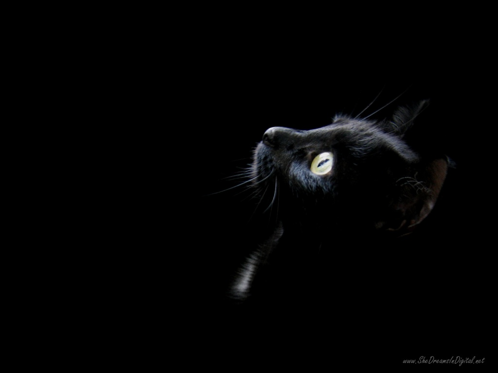 http://4.bp.blogspot.com/-W8skZXL2RS4/TpEjMKKn0jI/AAAAAAAAAAM/oL70kD5uacU/s1600/black-cat-head-wallpapers_3110_1024.jpg