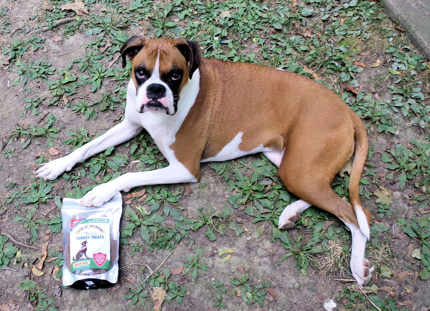 Best Training Treats For Dogs With Sensitive Stomachs