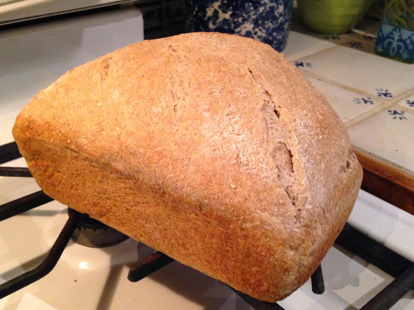 Bread #63: Cornmeal/white good for sandwiches 2