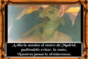Asesinada por el metro de Madrid.