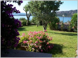 fiori piante e giardini del mondo piante adatte per un