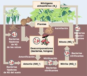 Ciclo Biogeoquimico