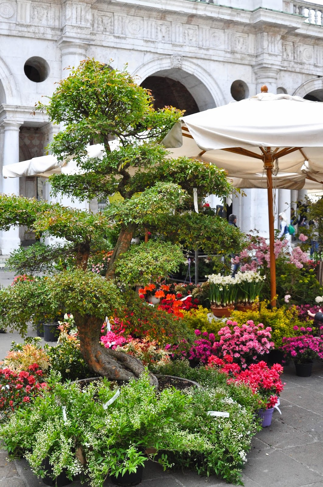 Potted tree, 7th Edition of 'Fiori, colori, e...' - Floriculture market show, Vicenza, Italy