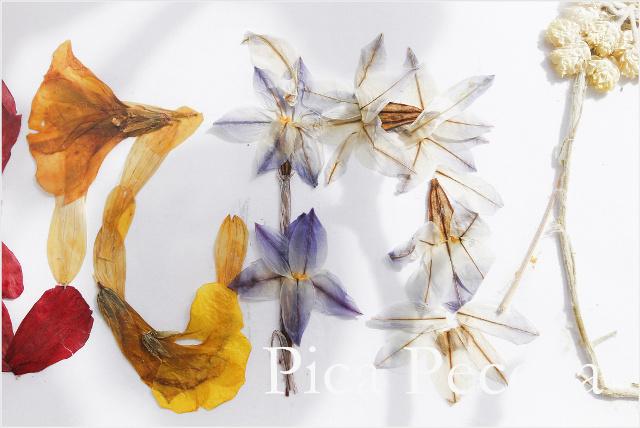 cuadro-con-nombre-hecho-flores-secas-prensadas-diy-06