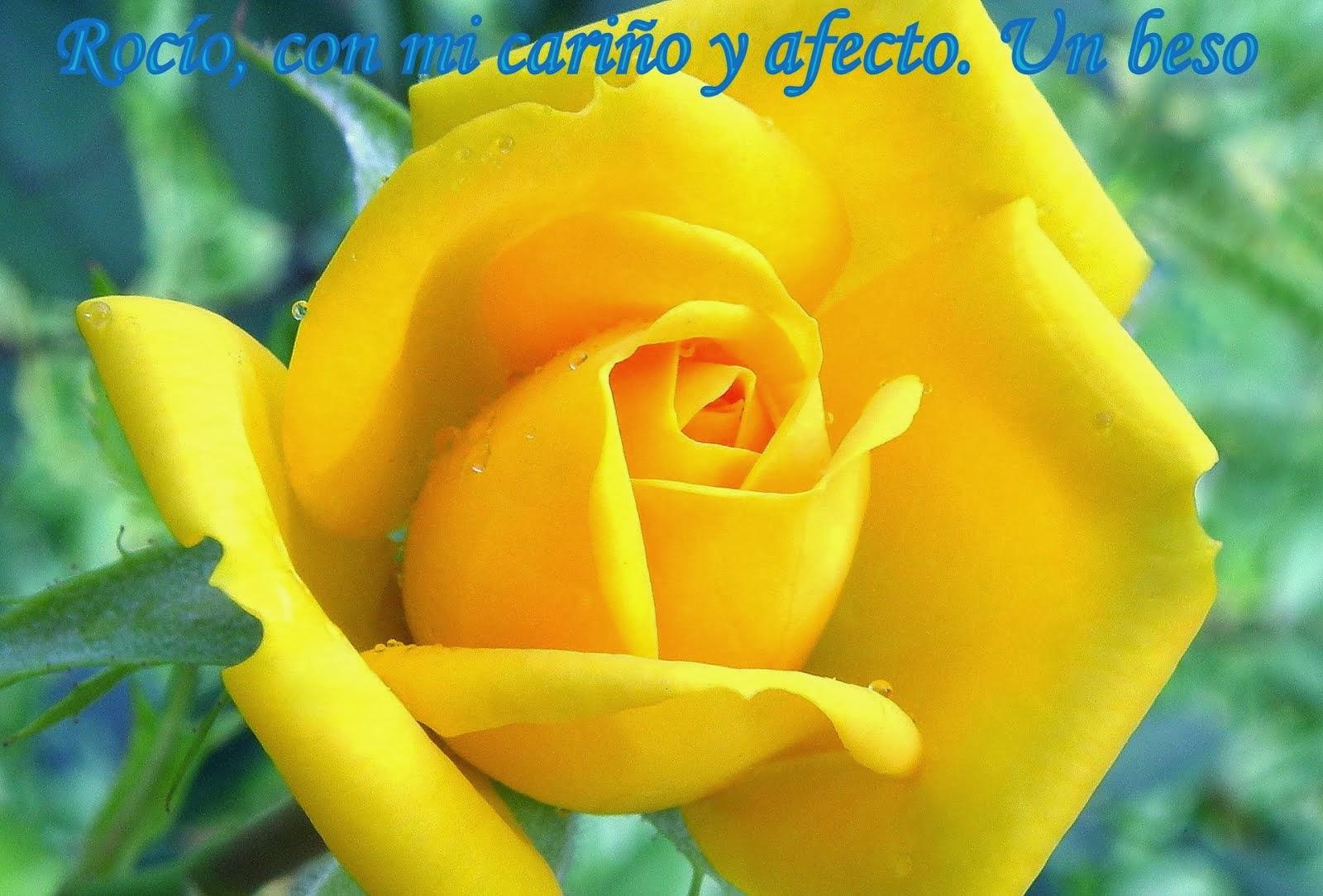 Flor de Julio