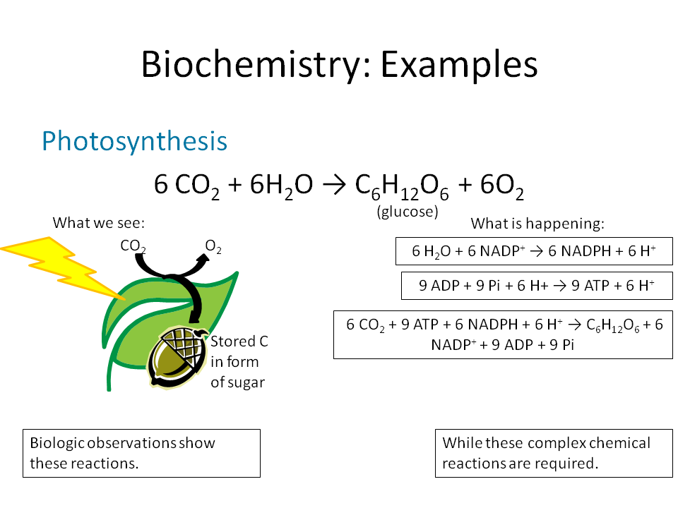 the photosythesis Photosynthesis is a process for converting sunlight into energy used by plants, algae, and some bacteria the way photosynthesis.