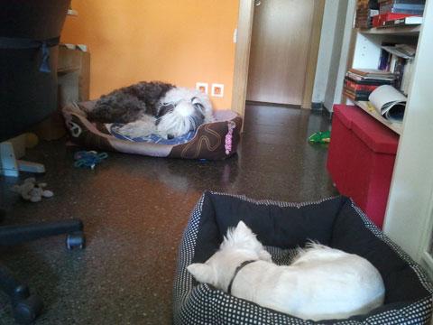 Unha y Lucas durmiendo