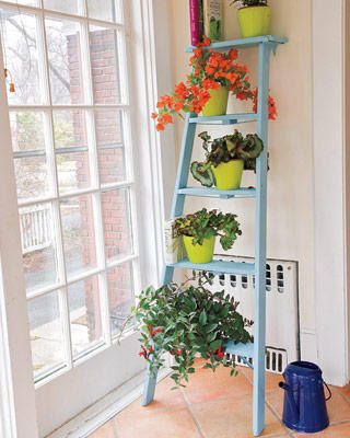 Ladder+colorful+plants