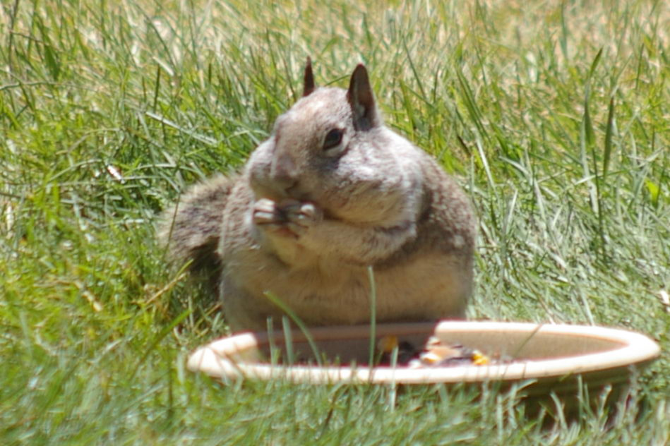 Little woman fat squirel