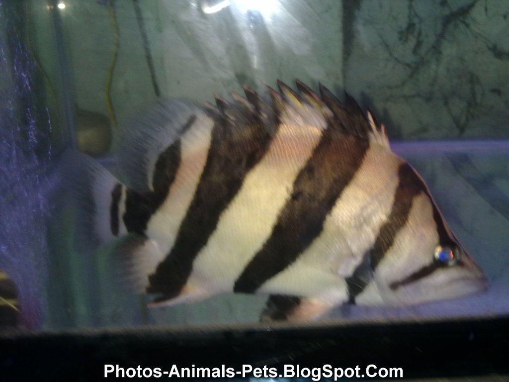 Image Piranha Fish