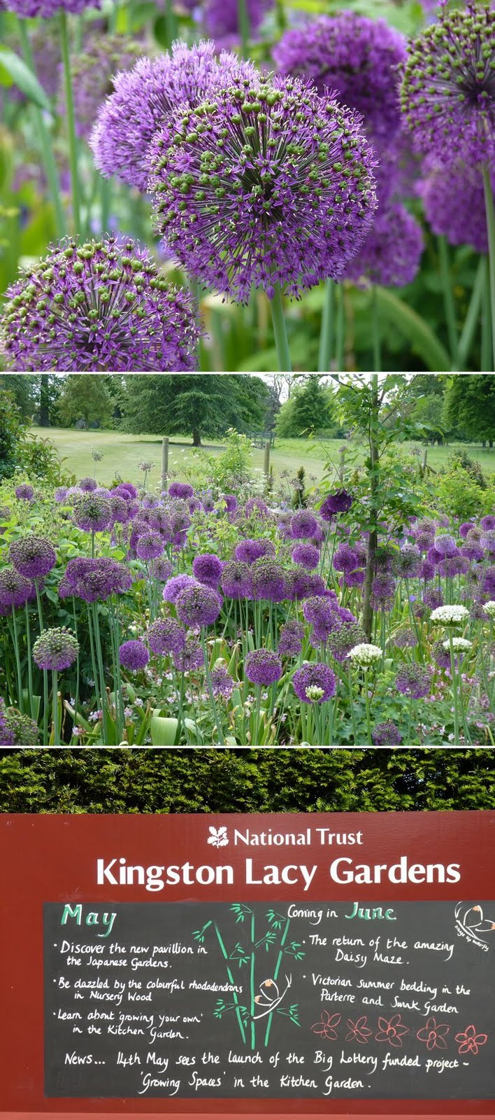 Kingston_Lacy_Garden