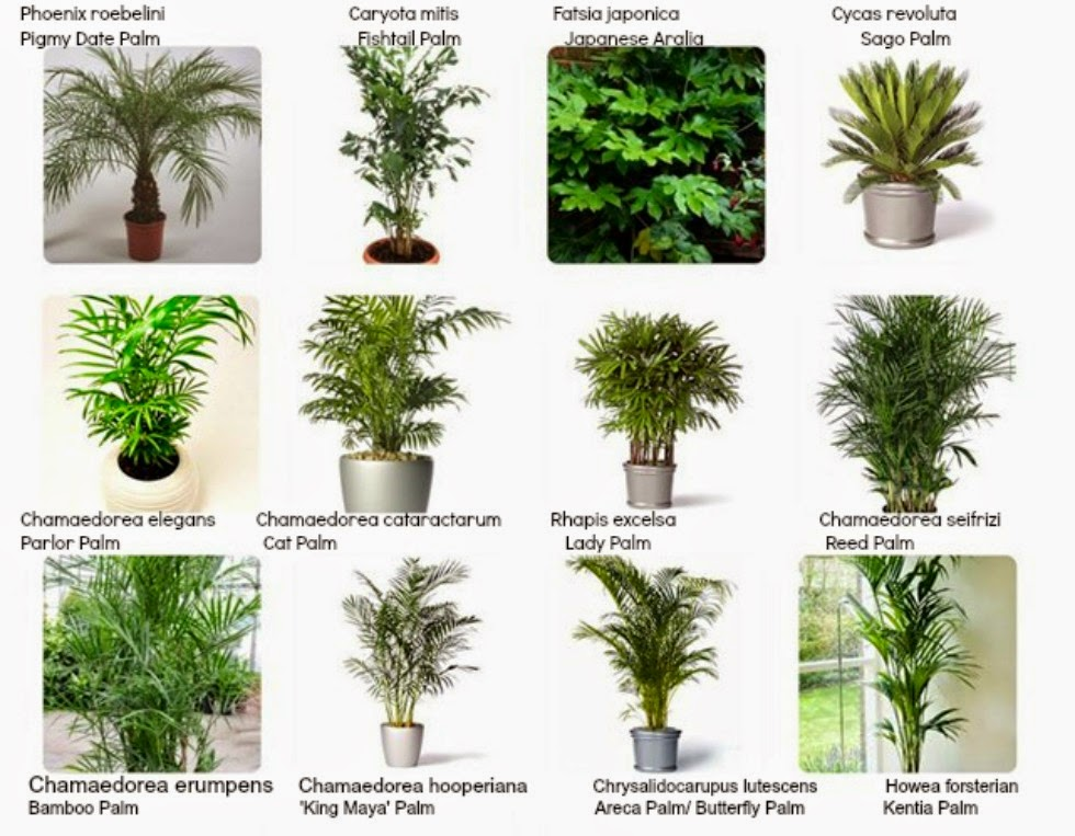 interiorscaping compendium indoor plant identification, Natural flower