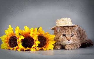 Gato con girasoles