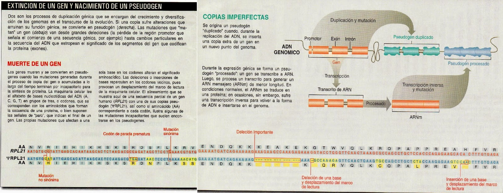 ADN basura\