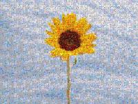 Mozaiq-crear-imagen-mosaico-foto