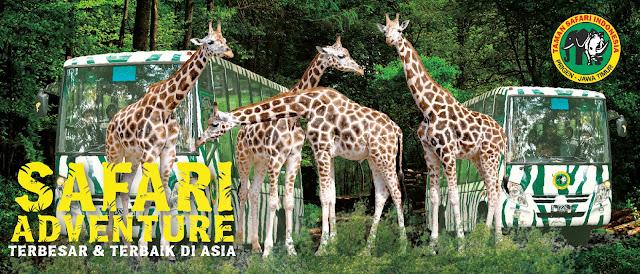 Paket Wisata Taman Safari