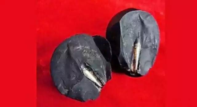 Ανακαλύφθηκε βίδα 300 εκατομμυρίων ετών ενσωματωμένη σε βράχο στην Κίνα