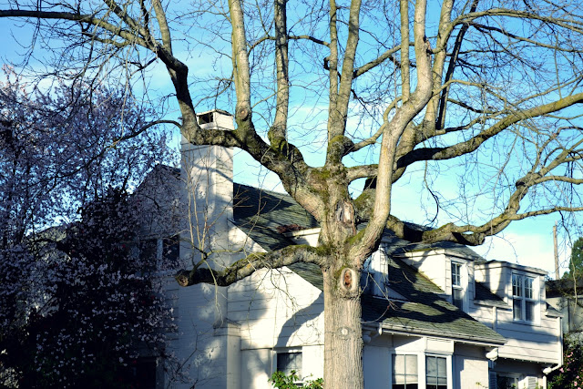 green lake park, neighborhood, seattle, white, house, old tree,