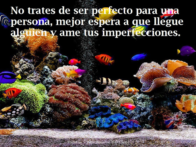 No trates de ser perfecto para una persona, mejor espera a que llegue alguien y ame tus imperfecciones
