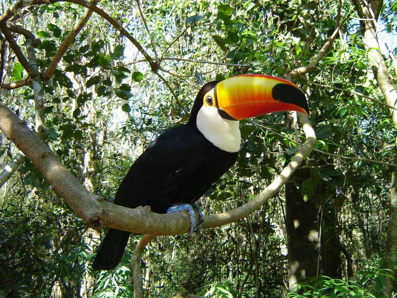http://4.bp.blogspot.com/-WC_BilfFBwI/TZHfBQhY35I/AAAAAAAABI8/_QvobPgLvy8/s1600/BXK38638_tucano800.jpg