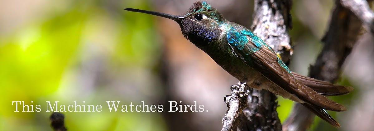 This Machine Watches Birds.