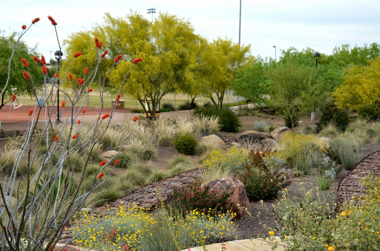 Ramblings from a desert garden a jewel in the city for Garden design xeriscape