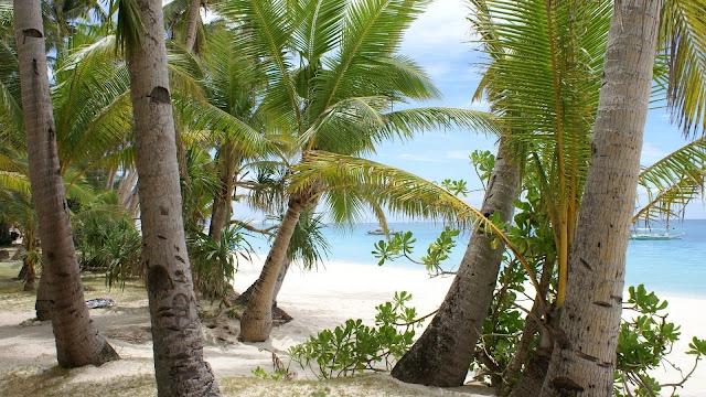 Beach Palms Sand Vacation HD Wallpaper