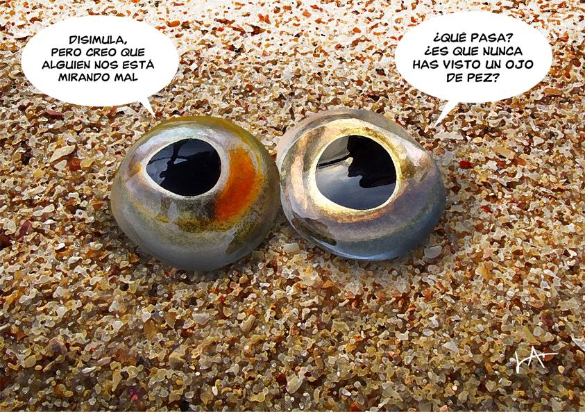 Ojos de pez pescado del dia for Espejo ojo de pescado