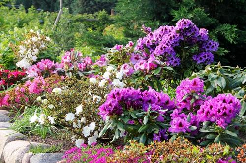 Friesenwall Bepflanzen natuerlichkreativ nochmal rhododendron