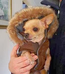 dog wearing parka